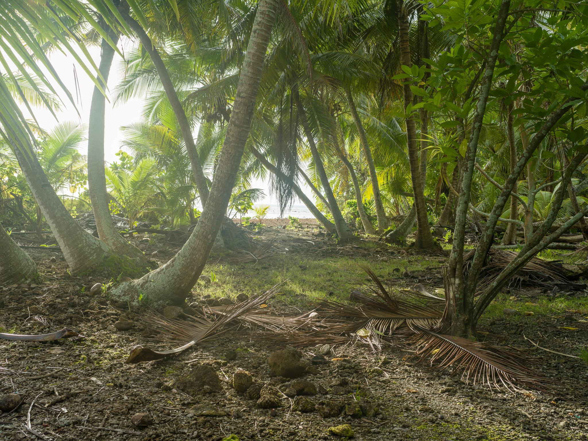 The jungle, Enedrik-Kan Island, Milli Atoll, Marshall Islands_Matthew Arnold