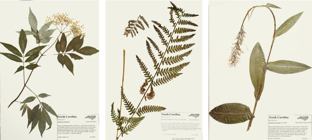 High Country Herbarium: Preserving Plants & Plant Communities in the Southern Appalachians
