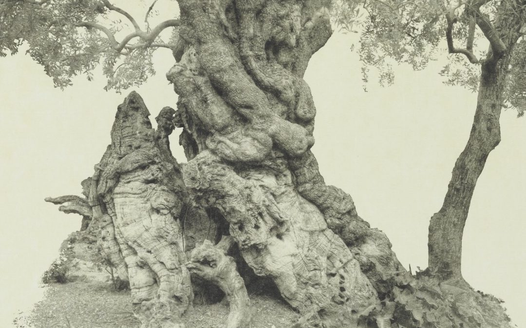 ARTtalk – Wendy Babcox: Every Olive Tree in the Garden of Gethsemane